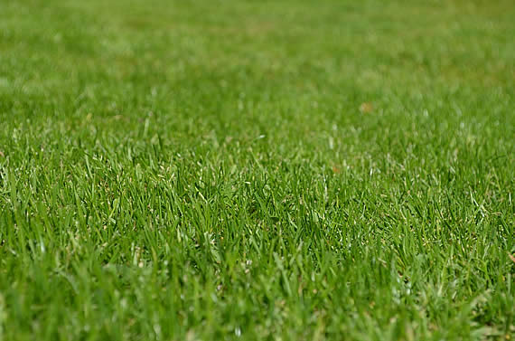 Wie bereite ich meinen Rasen für die Gartensaison vor? Foto: Huskyherz / pixabay.com