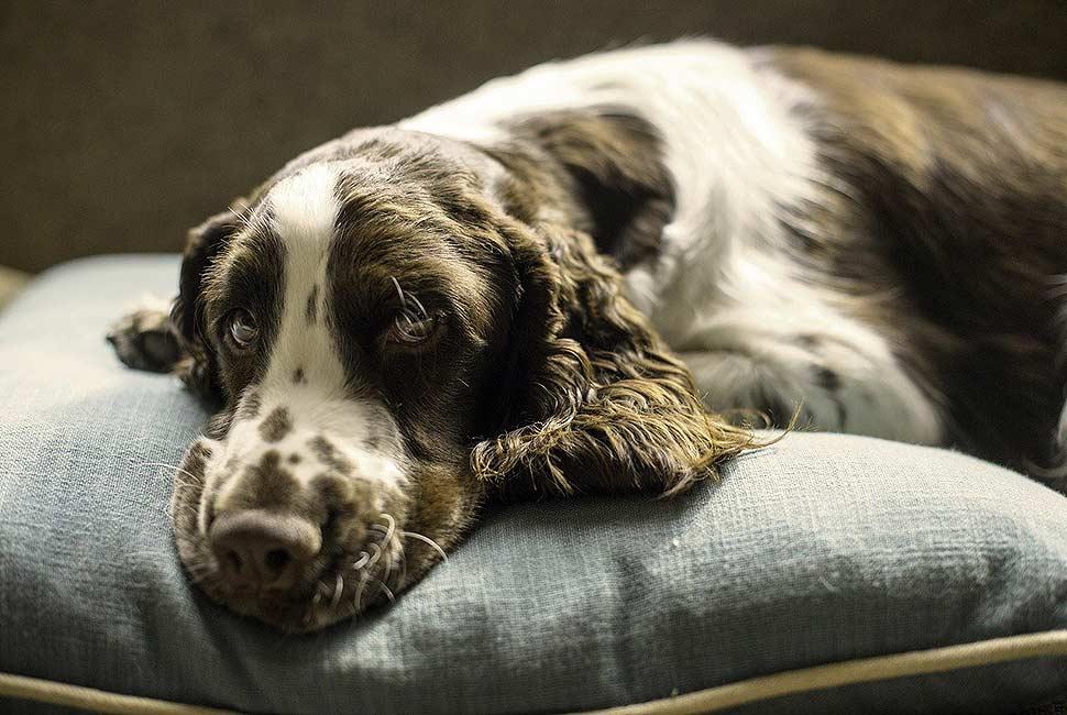 Gemütlicher Rückzugsort für den Vierbeiner mit passendem Hundebett. Foto: picabay.com