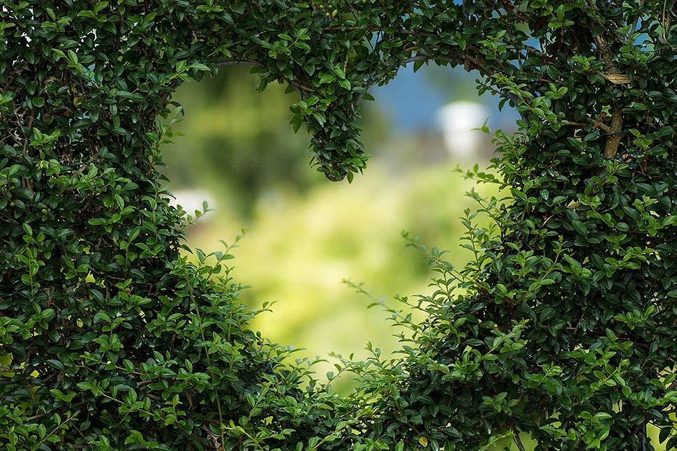 Gartentrends 2021: Das bringt die neue Saison. Foto: pixabay.com