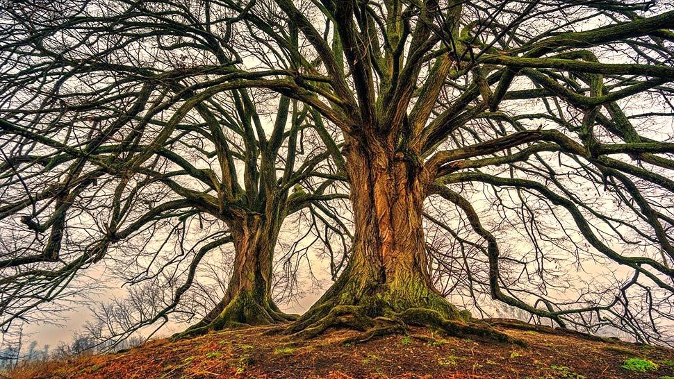 Verantwortungsvoll mit Holz umgehen – Holzrahmenbau ist besonders ressourcenschonend. Foto: pixabay.com