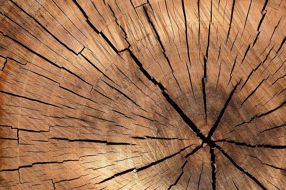 Die Qual der Wahl – beliebte Holzarten für Möbelstücke und modernes Wohnen. Foto: pixabay.com