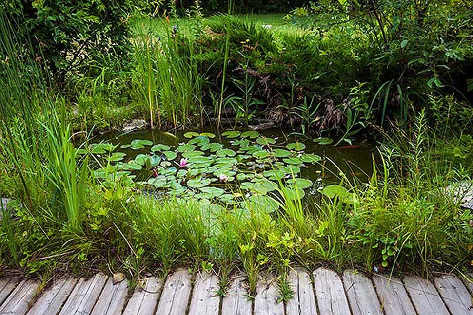 Einen Teich im eigenen Garten anlegen. Foto: iStock.com / Elenathewise