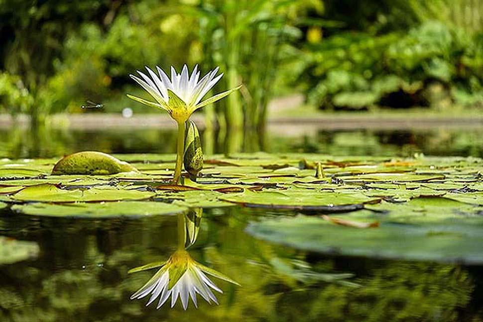 Einen Teich im eigenen Garten anlegen. Foto: pixabay.com