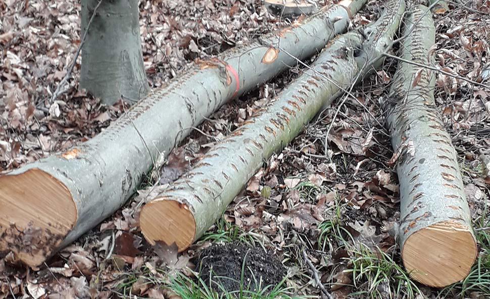 Brennholz besteht in der Regel aus minderwertigen Stämmen und Baumkronen. Foto: HKI